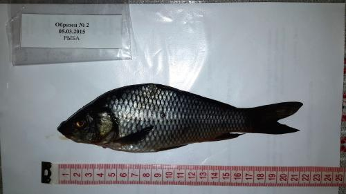 Volgograd Ecopress IMEAP fish sample